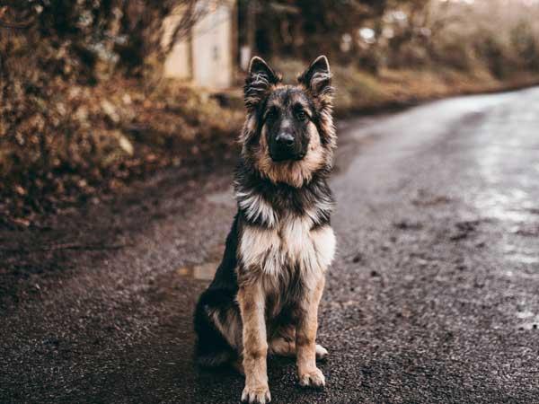 Hondengedragscentrum Oost - Consult